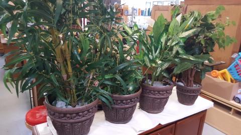 SamLa Pflanzen
